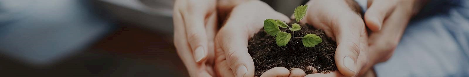 Header image - closeup of sets of hands cradling a growing plant