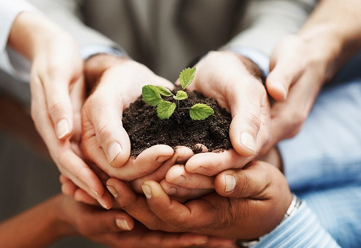 Image of multiple pairs of hands cradling soil and a growing plant